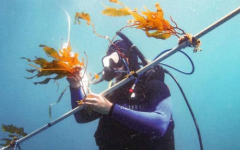研究表明海洋生物燃料的潜力巨大